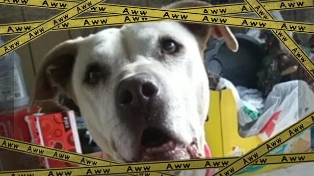 dog-24 [www-frame