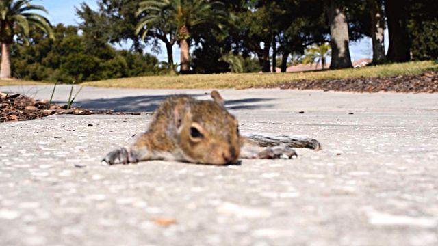 squirrelbaby1