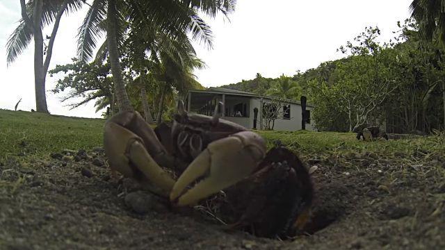crabstealsgopro0