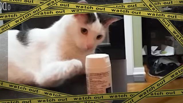 cat -frame