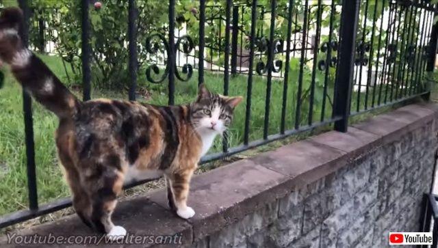 catsgarden0_640