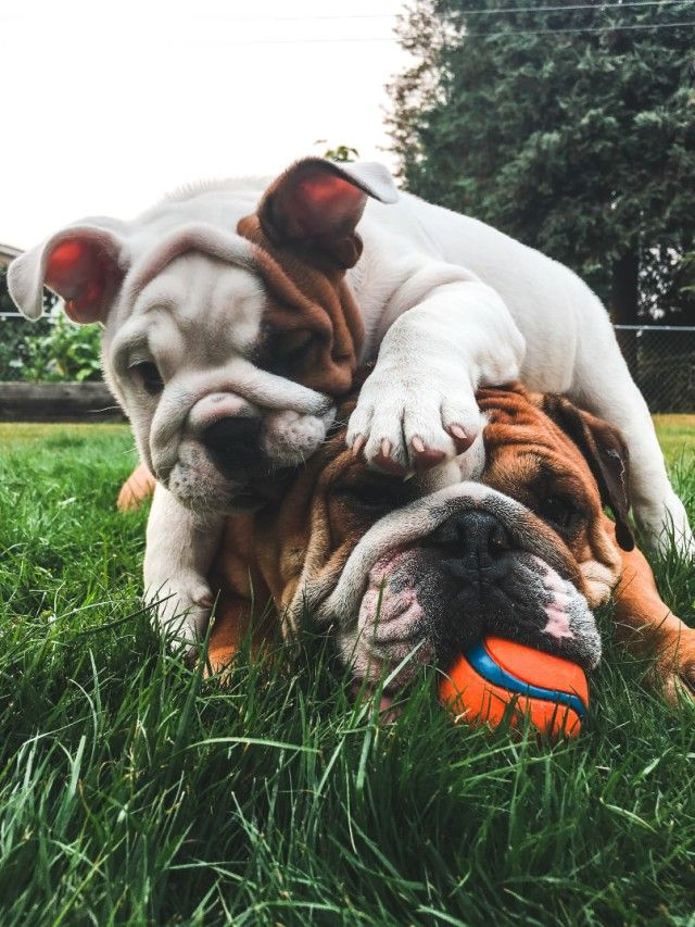 cute-dogs_e