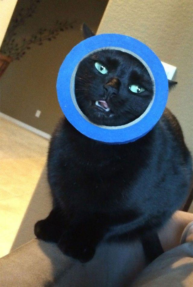 funny-idiot-cats-262-5ae07eaa6de91__605_e