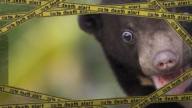 bear-1_e-frame