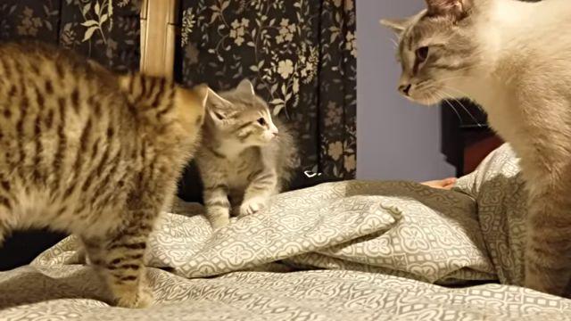 catdad1