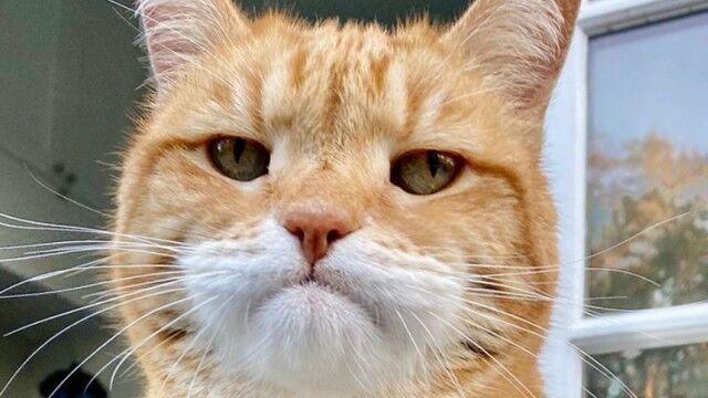 不満顔は仕様ですの猫