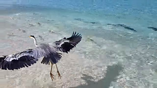 Maldives6