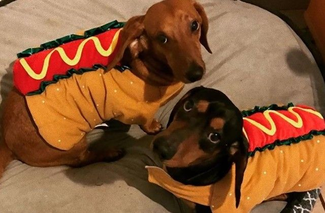 halloweenhotdogs0_e