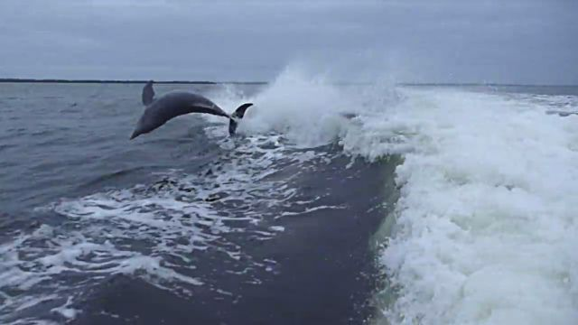 dolphincollision1
