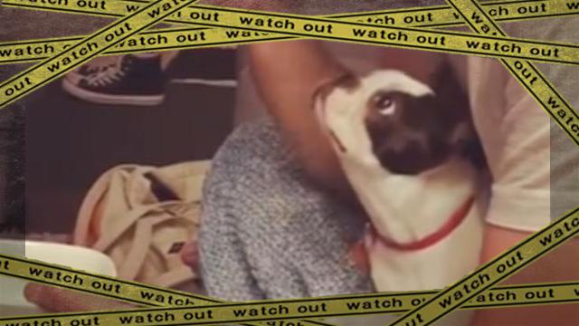 dogpopcorn1 [www-frame
