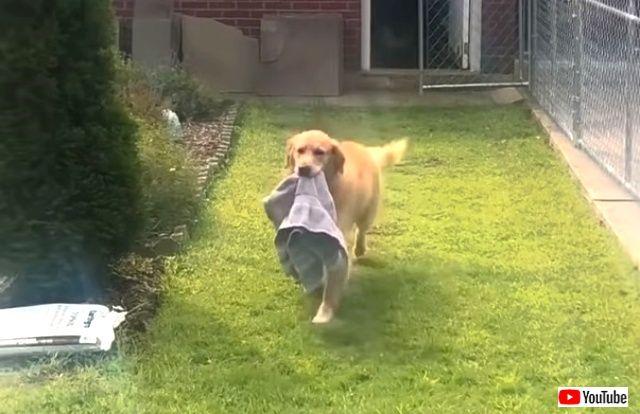 towels2_640