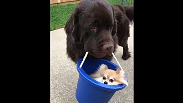 puppyinbuckets2