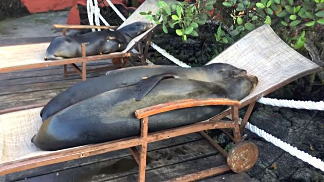 nappingsealions1