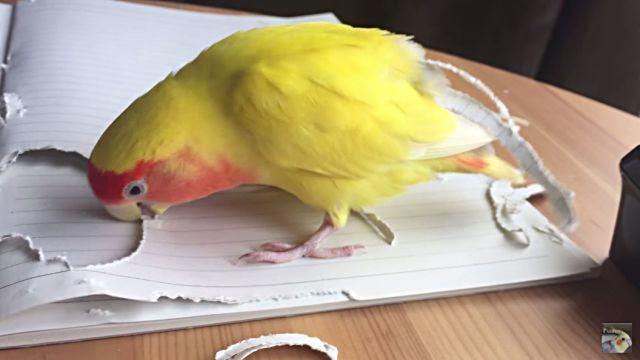parrotnnotebook6