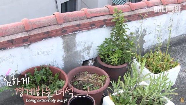 rooftopcat4_e