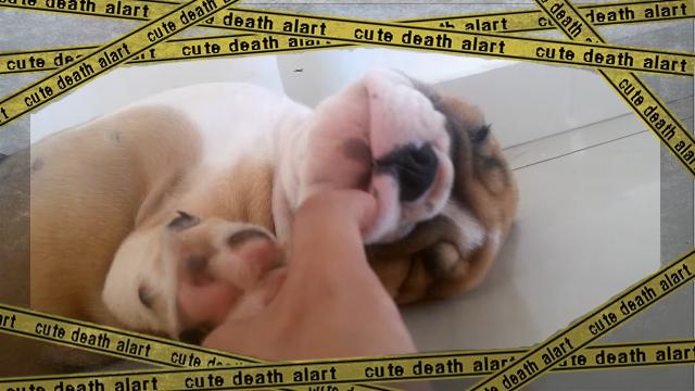 bulldog-f [www-frame