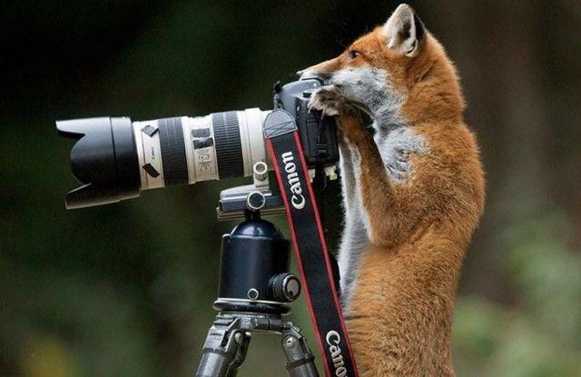photographers14_e