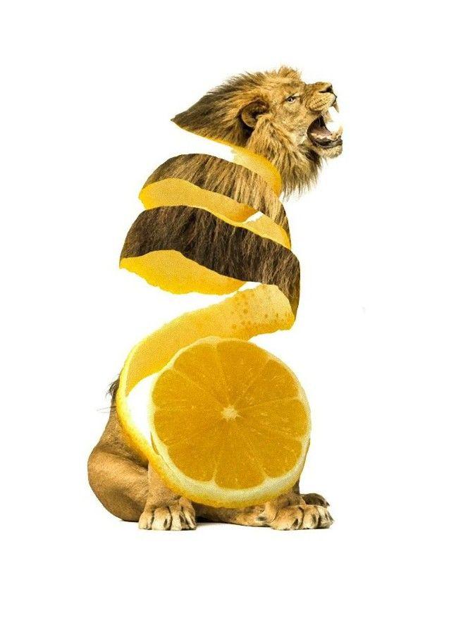 fruitsanimals7_e