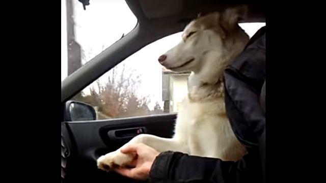 drivingdog3