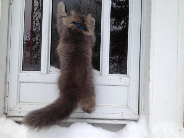 funny-animals-first-snow-cats-dogs27_e