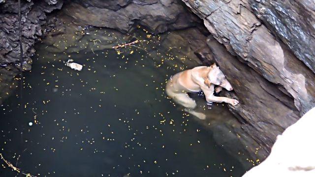 drowningdog0