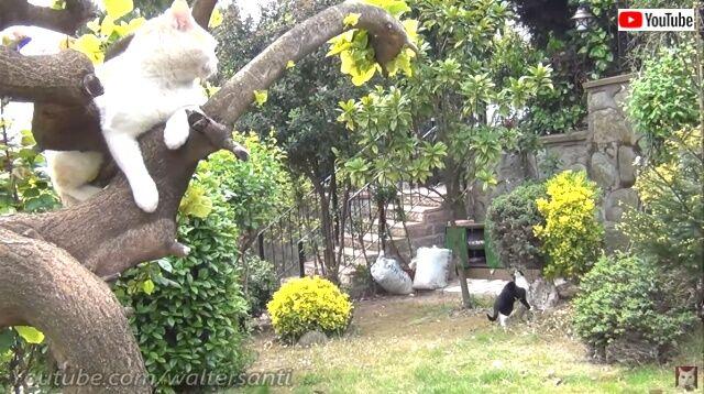 catsrbackinlove0_640