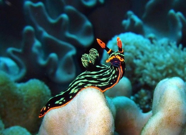 beautiful-unusual-sea-slugs-12__880_e