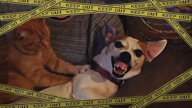 funnydogcat1-frame