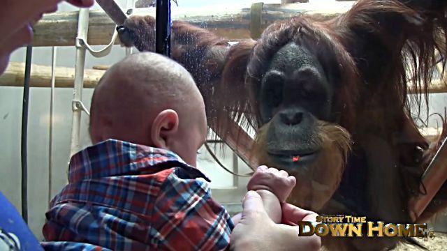 orangutanbaby5