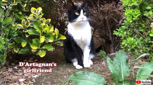 catsgarden8_640