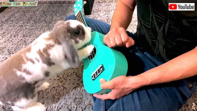 rabbitplaysguitar3_640