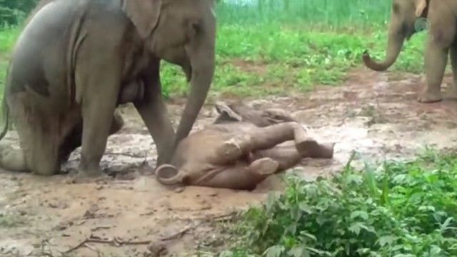 babyelephant2_e