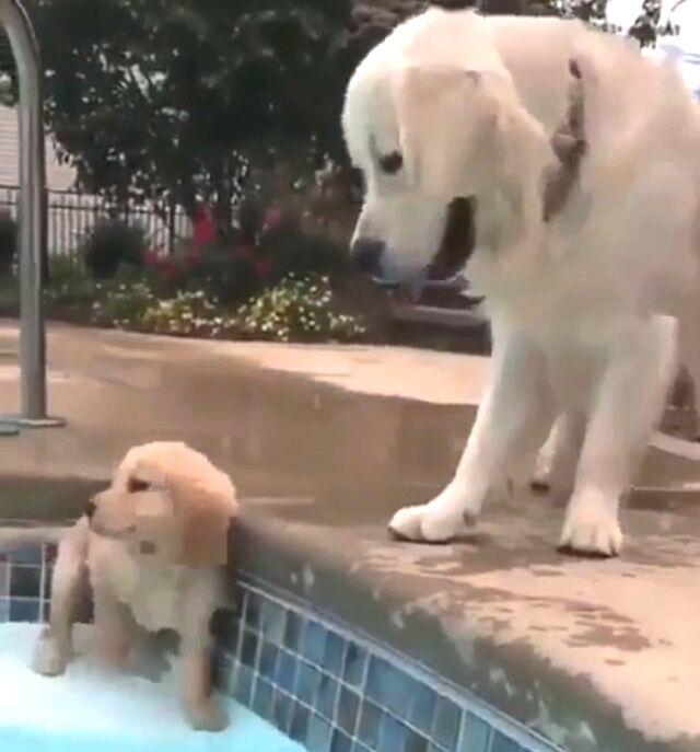learningtoswim1_640