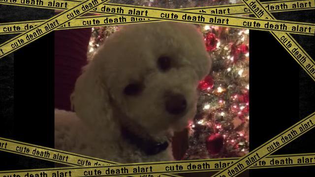 dog--f [www-frame