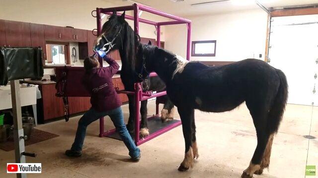 horsedentist1_640