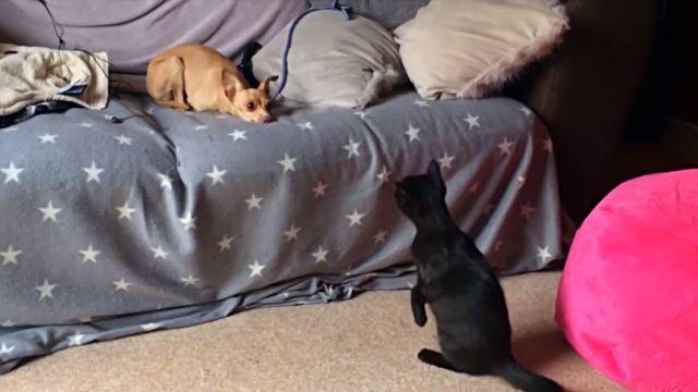 dogsmeetingkittens1