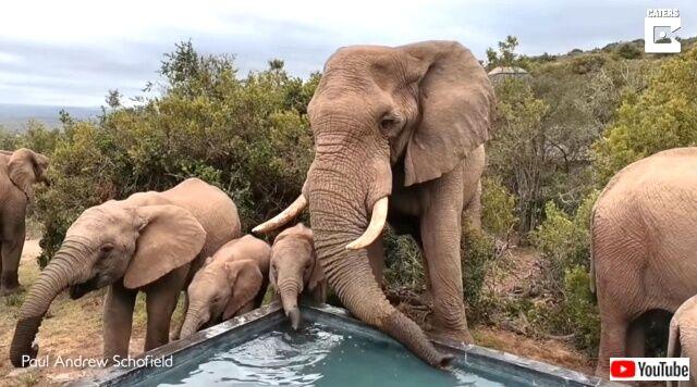 elephants6_640
