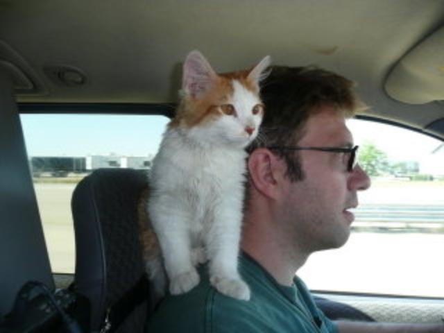 cats3 ok