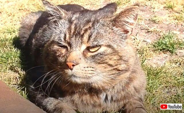 猫氏「ここのおうちなら飼われてあげてもいいニャ!」そして野良猫が家族になった!