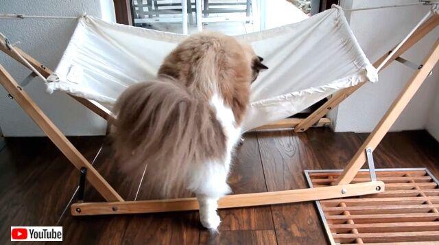 hammockcats1_640