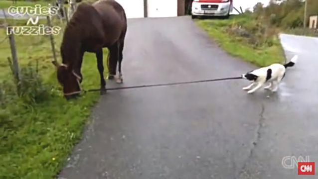 dogpullshorse1