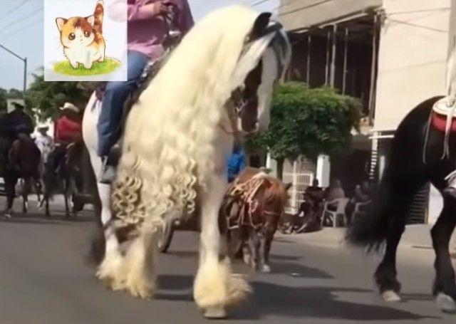 funnyhorses2_e