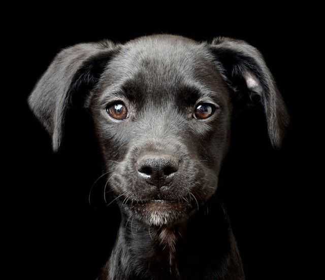 kennel-club-dog-photographer-competition-2017-5_e