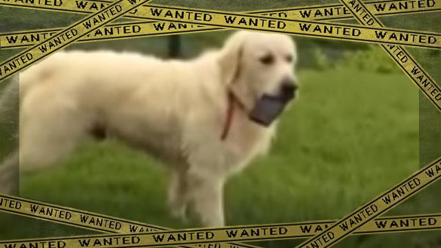 cellphonedogbigger2 [www-frame