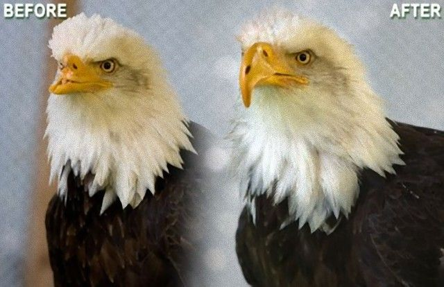 beauty-bald-eagle-3d-print_e