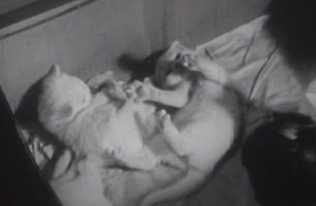 1947cats13_e