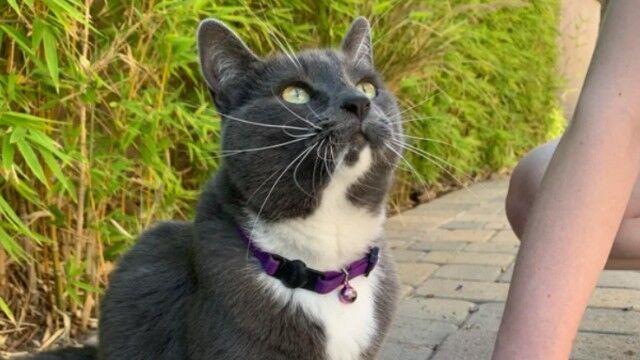 我が家の愛猫が三才になったので…。飼い主、愛猫の誕生日記念に猫とおそろいのブレスレットを作ってみた。その様子に関する海外の反応は?