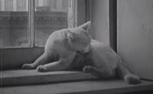 1947cats1_e