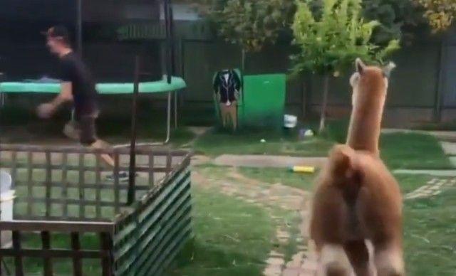 alpaca4_e