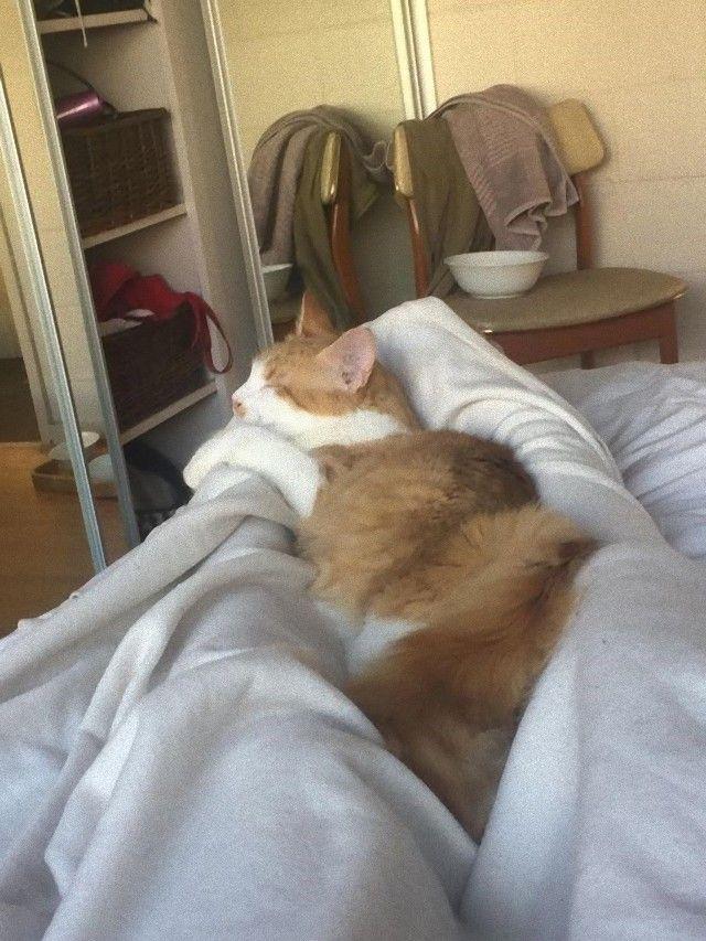 catcatcat2_e
